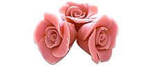 Roses roses (10)
