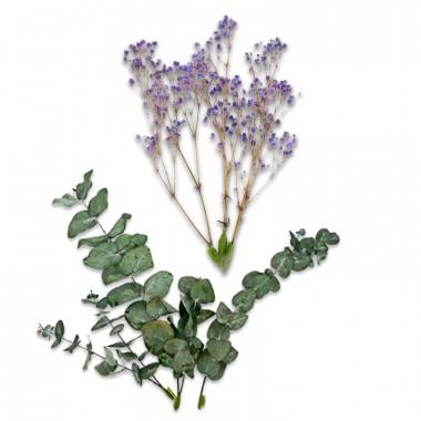 Décoration Fleurs séchées - Eucalyptus et Gypsophile violette