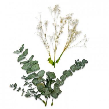 Décoration Fleurs séchées - Eucalyptus et Gypsophile blanche